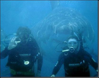 tiburondetrasdebuceadores
